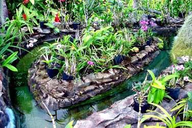 Le parc exotica abrite de nombreuses espèces végétales endémiques de la Réunion