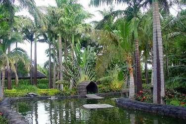 Palmiers, cocotiers, fleurs tropicales et plantes aromatiques...