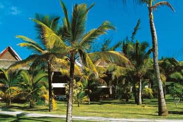 Les Suites Junior sont disséminées au coeur du jardin tropical de l'hôtel