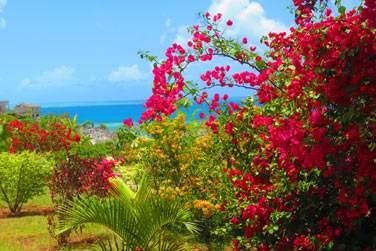 au coeur d'un très joli jardin fleuri