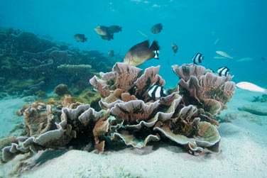 Les fonds marins sont intacts