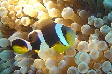 Rencontrez des poissons multicolores d'une beauté remarquable !