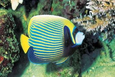 au milieu d'un monde sous marin extraordinaire ...