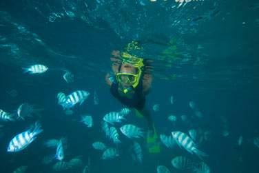 A vos palmes, masque et tuba. Vous êtes dans le paradis des poissons tropicaux !