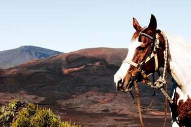 Balade à cheval sur la plaine des Sables
