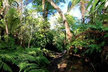 La Végétation luxuriante de la Réunion