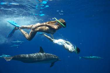 Nagez avec les dauphins au Maradiva !