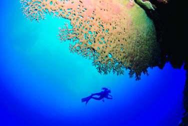 Les fonds marins de Rodrigues sont fabuleux