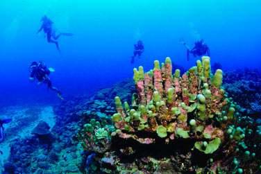 Plongez au coeur d'une faune sous-marine exceptionnelle