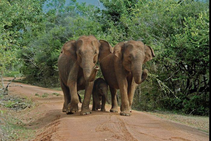 Le Sri Lanka en famille