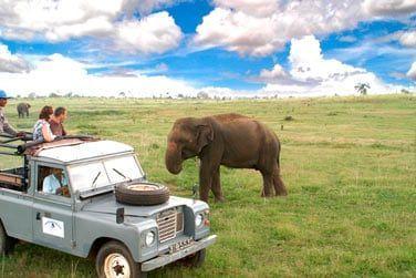 L'occasion d'apercevoir de nombreux éléphants