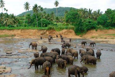 Nous vous conseillons d'opter pour un safari dans une réserve