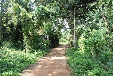 Avant d'arriver à Kandy, vous visiterez un jardin d'épices