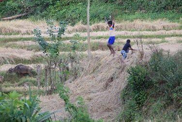 Vous verrez des enfants s'amuser dans les champs