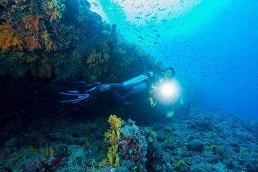 Ou lors d'une séance de plongée sous-marine !