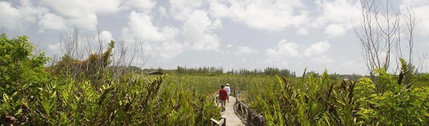Sites de rencontres à Nassau