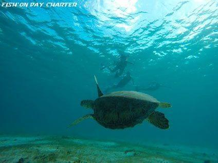 tortues petite terre guadeloupe